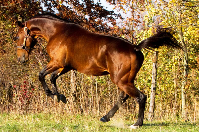 WRR_JUMPING_600BY400